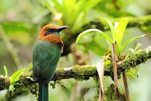 best time to travel to Costa Rica to enjoy birdwatching