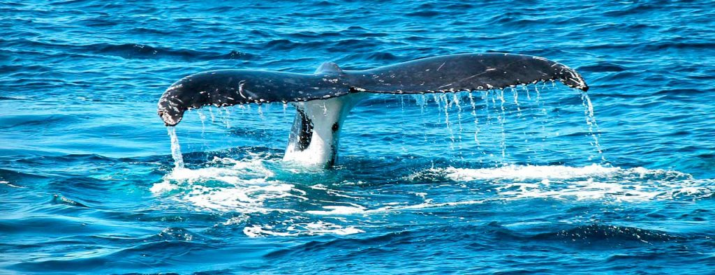 January in Costa Rica - Whales