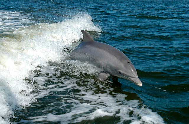 Costa Rica in February - Dolphins