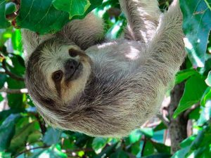 Best time to travel to Costa Rica to see sloths