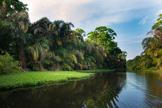 Caribbean Side of Costa Rica- Tortuguero